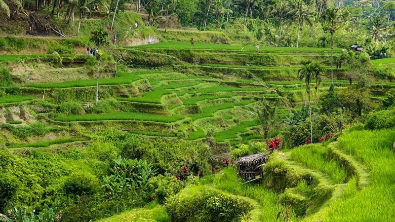 places to take photos in Bali - Tegalalang Rice Terrace