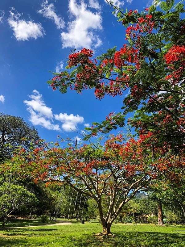 Travel Guide of Things to Do in Port of Spain Trinidad - Go to the Royal Botanic Gardens